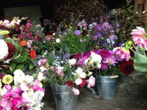 Autumn-market-flowers